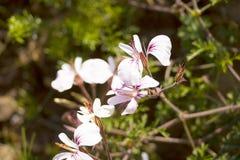 Полевые цветки горы таблицы Стоковые Фотографии RF