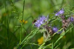Полевые цветки лета Стоковая Фотография RF