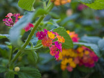 Полевые цветки куста осени Стоковое фото RF