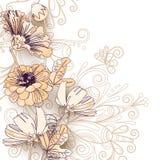 Полевые цветки на белизне Стоковое Изображение