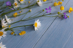 Полевые цветки на деревянной предпосылке Стоковое Фото