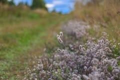 Полевые цветки на краю поля Стоковые Изображения