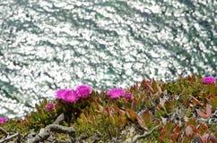 Полевые цветки на краю скалы Стоковая Фотография