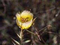 Полевые цветки на парке глуши побережья Laguna стоковые фото