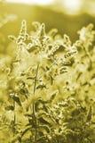 Полевые цветки на лужке стоковая фотография