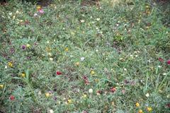 Полевые цветки обочины Стоковые Фотографии RF