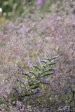 Полевые цветки поля стоковая фотография rf