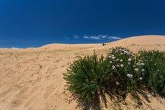 Полевые цветки пустыни зацветая Стоковое Изображение RF