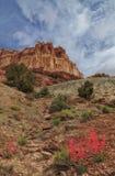Полевые цветки пустыни Стоковые Фото