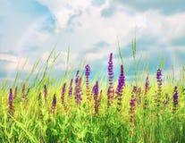 Полевые цветки сирени в луге и красивом небе Стоковые Фото