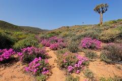Полевые цветки - Южная Африка Стоковые Фотографии RF