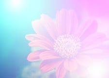 Полевые цветки яркого цвета красивые в мягком стиле Стоковое Изображение RF