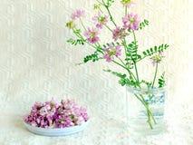 Полевые цветки Стоковое Изображение
