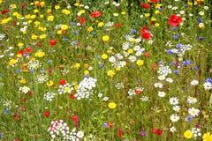 Полевые цветки. Стоковые Изображения