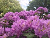 Полевые цветки 3 Стоковое Изображение