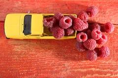 Поленики в автомобиле Стоковые Фото