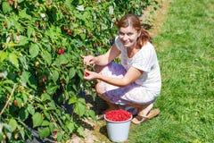 Поленики рудоразборки молодой женщины дальше выбирают ферму ягоды в Германии Стоковая Фотография