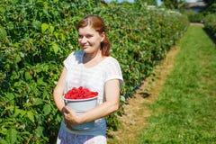 Поленики рудоразборки молодой женщины дальше выбирают ферму ягоды в Германии Стоковое фото RF