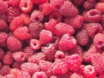 поленики серии Зрелые плодоовощи Сбор Стоковое Фото