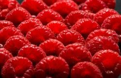 поленики фронта фокуса глубины крупного плана ягод отмелые Стоковая Фотография