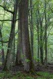 Полдень летнего времени туманный в лесе стоковые фотографии rf