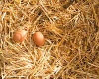 полдень 2 свежих яичка в солнечном свете в strow Стоковая Фотография
