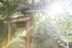 Под деревом bodhi, висок Isurumuniya, Anuradhapura, Sri Lank Стоковые Изображения