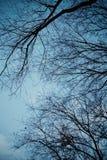Под деревьями Стоковая Фотография