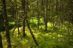 Пол леса в Ньюфаундленде Стоковые Фотографии RF