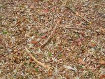 Пол леса Стоковое Изображение