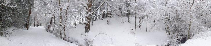 Полесье зимы панорамное Стоковые Фотографии RF
