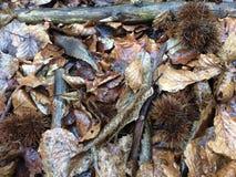 Полесье осени смолотое в Англии Стоковое Изображение