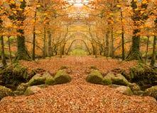 Полесье осени Стоковая Фотография RF