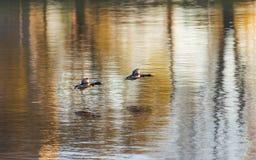 Полет над водой Стоковые Фото