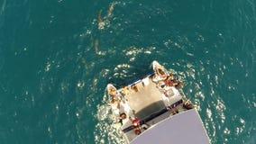Полет на катамаран между дельфином сток-видео