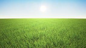 Полет над травой, восход солнца акции видеоматериалы