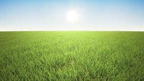 Полет над травой, время захода солнца видеоматериал