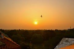 полет 2 птиц Стоковые Изображения