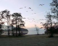 Полет рассвета Стоковая Фотография RF