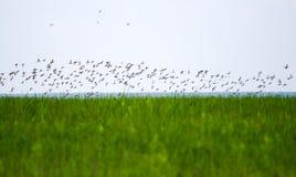 Полет утки над озером Стоковые Фото