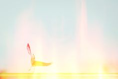 полет Стоковые Фотографии RF