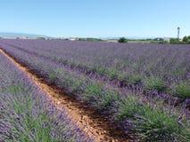 Поле лаванды, Провансаль, к югу от Франции стоковое фото