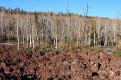 Поле лавы национального леса Dixie Стоковые Изображения