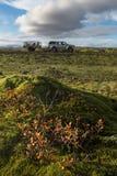 Поле лавы Grindavik на Исландии которое предусматривает зеленым мхом с желтым передним планом завода и приводом автомобиля через  Стоковая Фотография RF