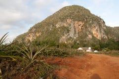 Поле ананаса в Кубе Стоковое фото RF
