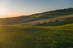 Поле апельсина покрашенное в тосканском ландшафте на заходе солнца Стоковая Фотография RF