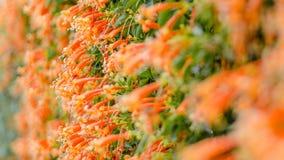 Поле апельсина Стоковое Изображение RF