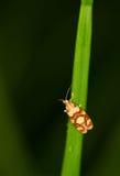 поле бабочки держало весну съемки макроса естественную Стоковая Фотография RF