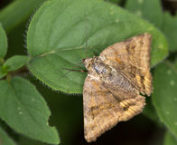 поле бабочки держало весну съемки макроса естественную Стоковые Изображения RF