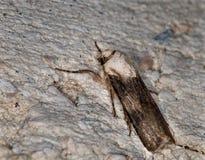 поле бабочки держало весну съемки макроса естественную Стоковая Фотография